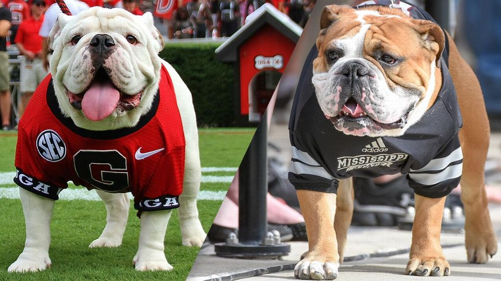 Comparing Bulldog traits in Georgia, Mississippi State