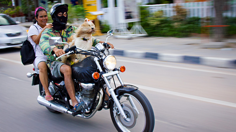 Canine Cruiser