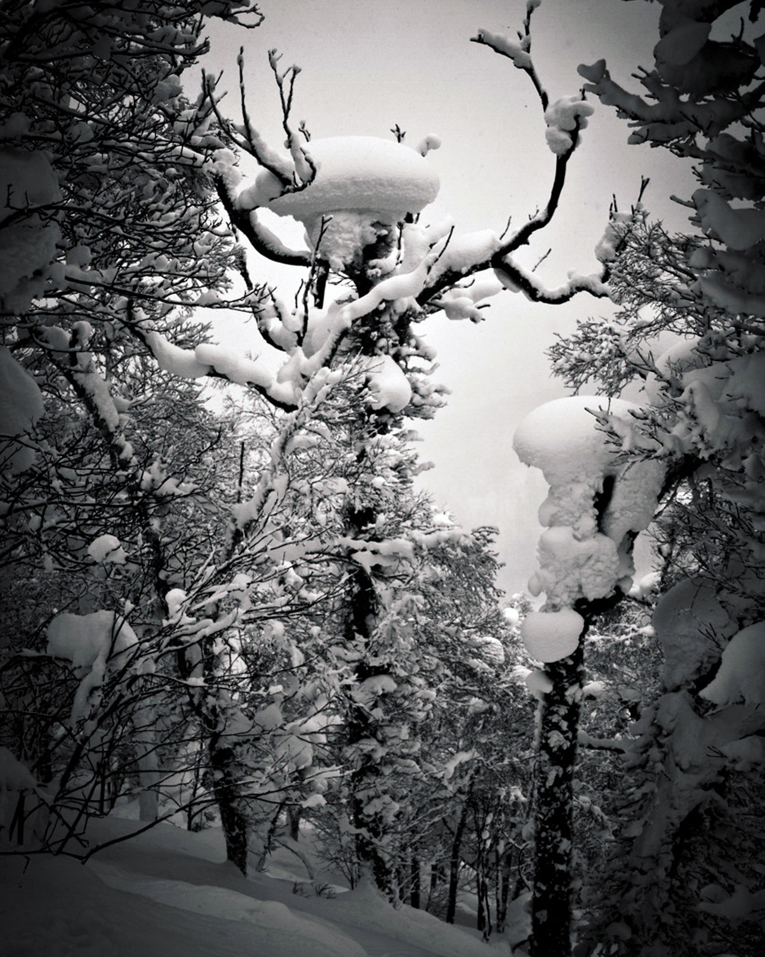 Loads of Snow