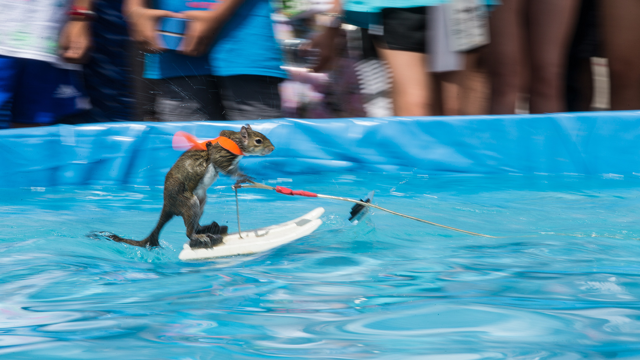 Twiggy the water-skiing squirrel returns for X Games Minneapolis 2018.