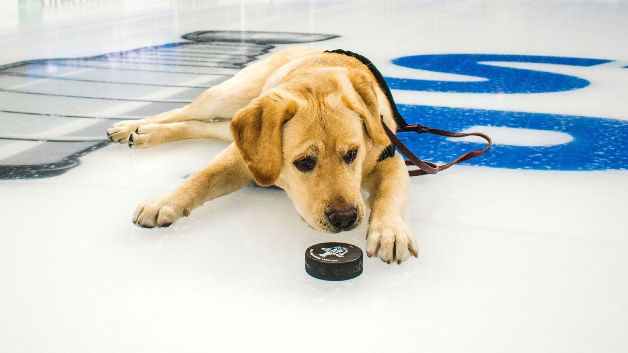 2e68573c5 Meet Barclay, the St. Louis Blues' dog training for a greater mission