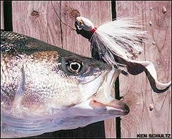 Spring striper fishing raystown lake